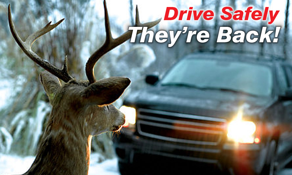 Drive Safely-Deer on Roads